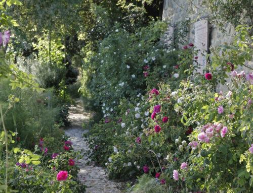 La voie des roses