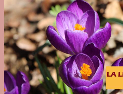 Jardin de l'abbaye de Valsaintes – La lettre du jardinier Mars 2020