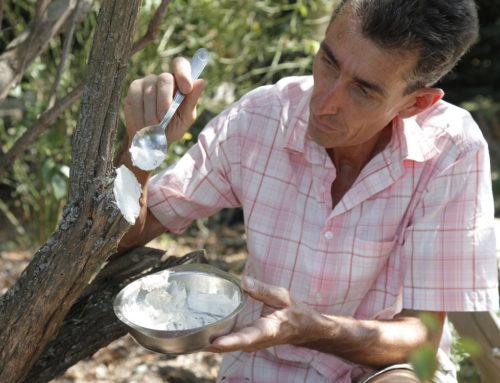 En direct du jardin sur Facebook : Les huiles essentielles au jardin