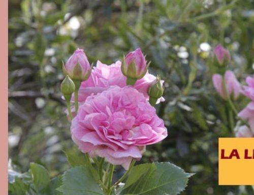 Jardin de l'abbaye de Valsaintes – La lettre du jardinier Mai 2020