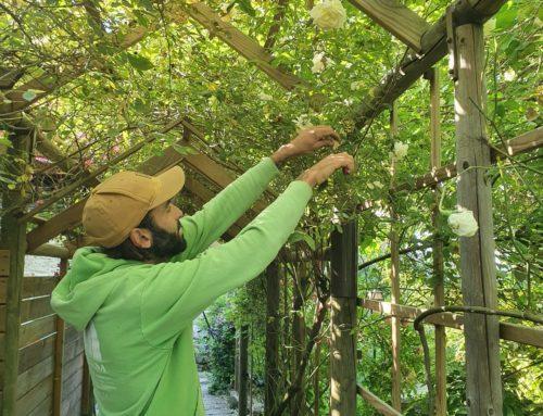 Les jardiniers au fil des saisons Juin 2020