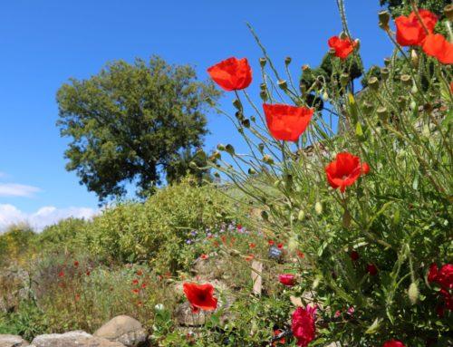 Journée  jardin sec – Dimanche 27 septembre