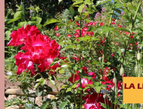 Jardin de l'abbaye de Valsaintes – La lettre du jardinier Juin 2020