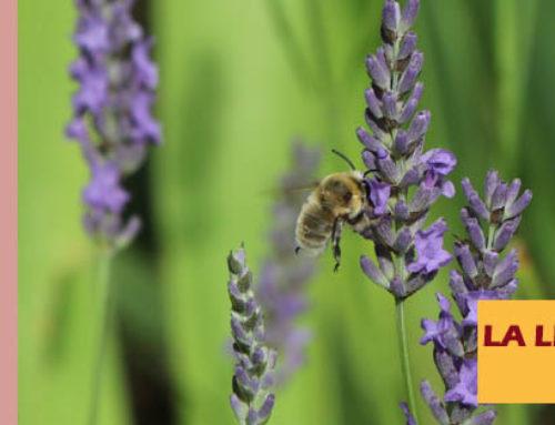 Jardin de l'abbaye de Valsaintes – La lettre du jardinier Juillet 2020