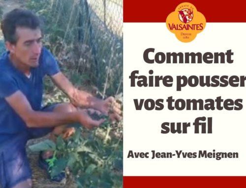 Vidéo : Comment faire pousser vos tomates sur fil.