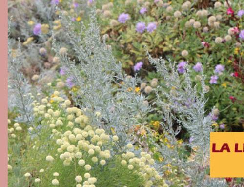 Jardin de l'abbaye de Valsaintes – La lettre du jardinier Août 2020