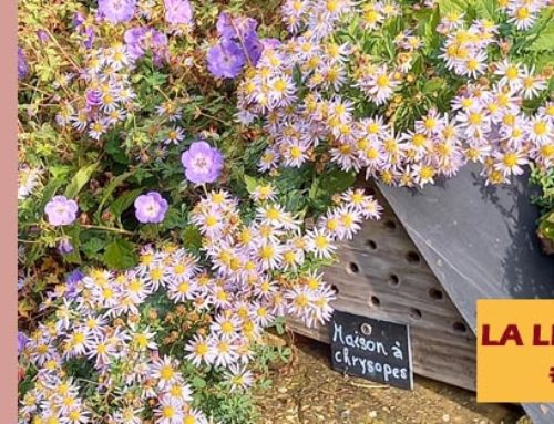 Jardin de l'abbaye de Valsaintes – La lettre du jardinier Octobre 2020