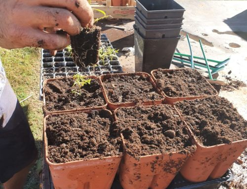 Les jardiniers au fil des saisons Octobre 2020