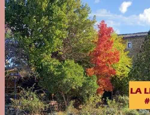 Jardin de l'abbaye de Valsaintes – La lettre du jardinier Novembre 2020