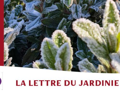 Jardin de l'abbaye de Valsaintes – La lettre du jardinier Février 2021