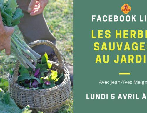 Rendez-vous dimanche en direct : Les herbes sauvages au jardin