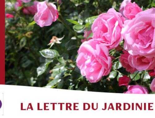 Jardin de l'abbaye de Valsaintes – La lettre du jardinier Juin 2021