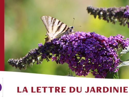 Jardin de l'abbaye de Valsaintes – La lettre du jardinier Juillet 2021