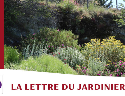 Jardin de l'abbaye de Valsaintes – La lettre du jardinier Septembre 2021
